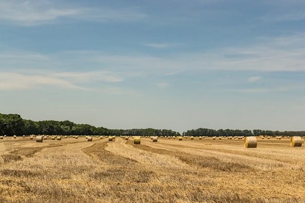 O feno rola no campo em uma área rural