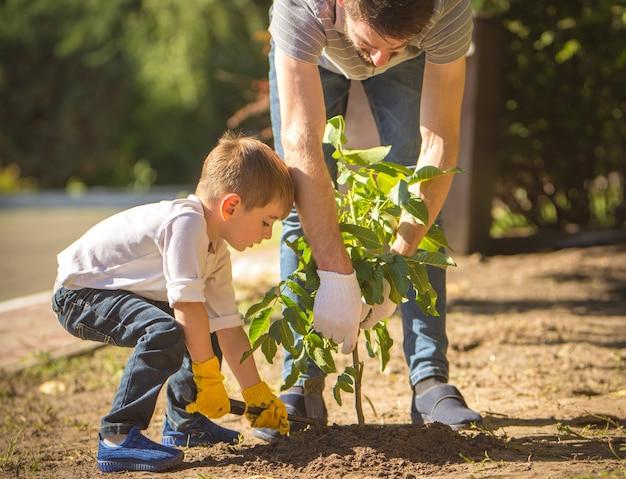 O filho e um pai plantam uma árvore