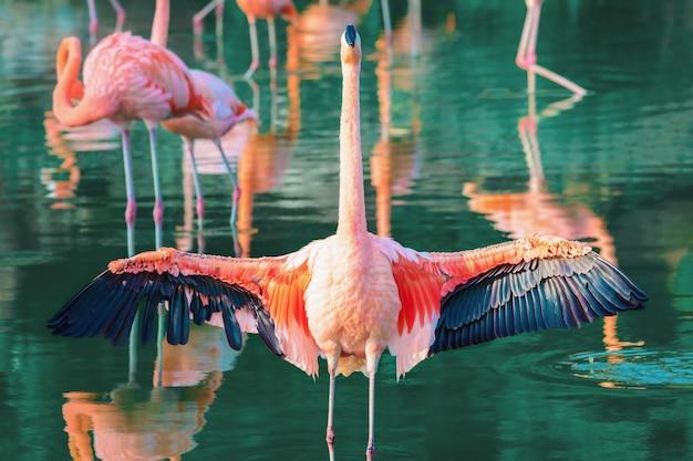 O flamingo rosa abriu suas belas asas.