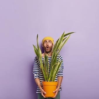 O florista surpreso com a barba por fazer usa um chapéu amarelo e um macacão listrado de marinheiro, focado para cima com um olhar inesperado, segurando um vaso com uma planta de sansevieria verde
