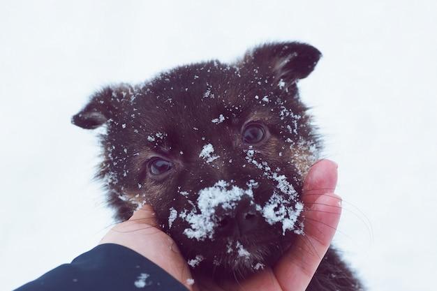 O focinho de um filhote de cachorro de uma cor escura na neve