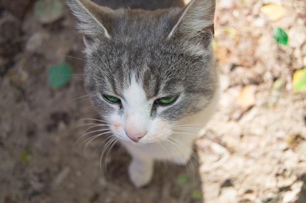 O focinho de um gatinho cinza em close-up, olhos verdes de gato