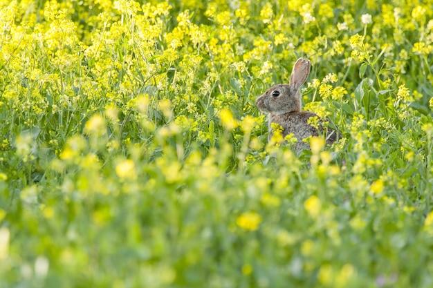 O foco seletivo de um coelho de escova em um campo coberto de flores e grama sob a luz do sol