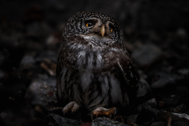 O foco seletivo de uma coruja cativante olhando de lado na imagem desfocada