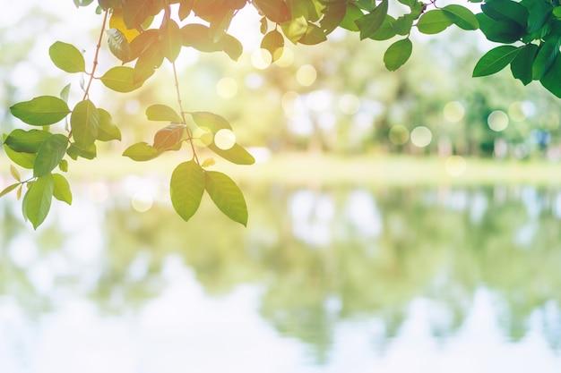 O foco seletivo em deixar a natureza bokeh parque verde muitas árvores na hora do sol com fundo de luz flare.