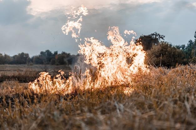 O fogo brwon grass está queimando feno seco está queimando após a colheita destruir o ambiente aéreo