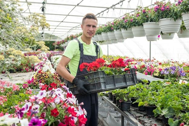 O funcionário que cuida das flores carrega uma caixa de plantas. trabalho em estufas