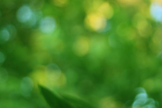 O fundo abstrato bokeh verde desfocado é uma bela arte natural do verão com o backdro