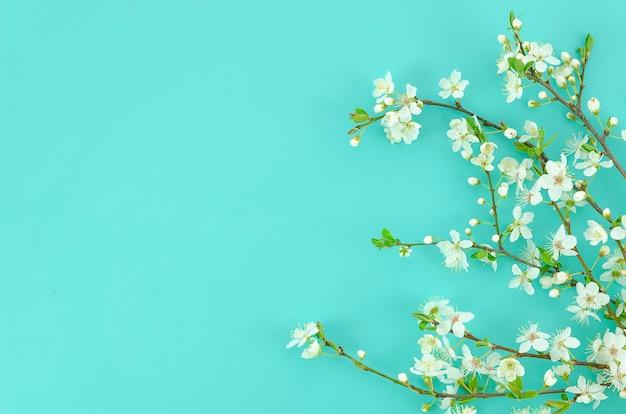 O fundo da mola com ramos de árvore brancos da flor ilumina o fundo da hortelã.