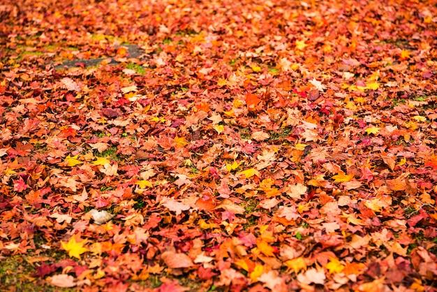 O fundo das folhas de outono, as folhas muda a cor.