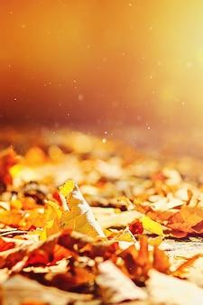 O fundo das folhas de outono das folhas de outono no parque na terra, amarelo, verde sae no parque do outono.