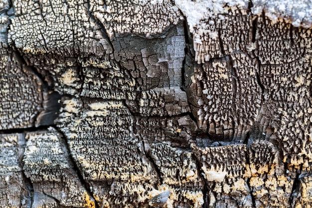 O fundo de madeira queimada.