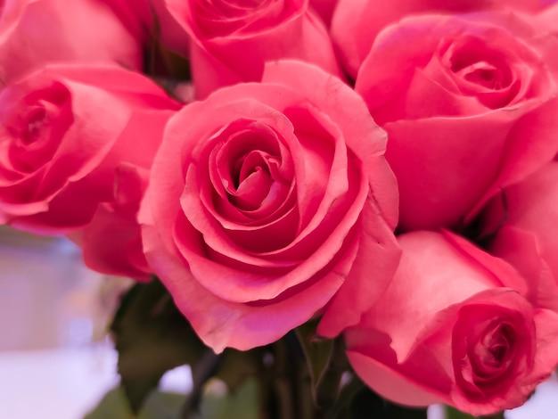 O fundo de rosas cor de rosa para o dia dos namorados ou dia das mães ou cartão postal do dia da mulher