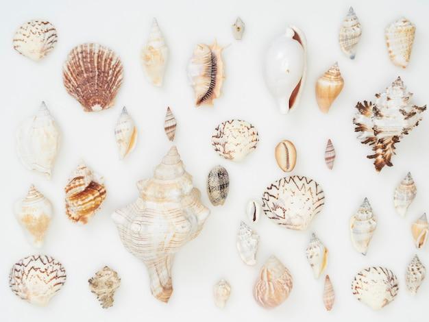 O fundo é feito de muitas conchas do mar.