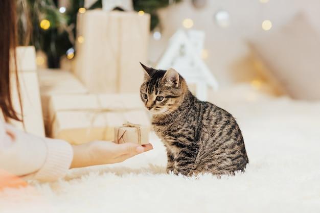 O gatinho aceita o presente.