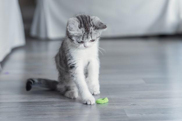 O gatinho brinca com uma fita azul em casa Foto Premium