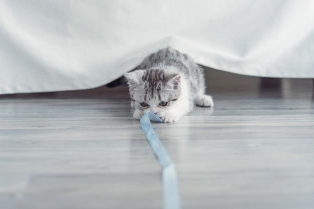 O gatinho brinca com uma fita azul em casa