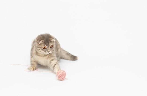 O gatinho brinca em um fundo branco