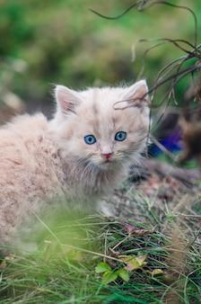 O gatinho cinco semanas de idade senta-se no jardim do gramado verde. gato deitado na natureza.