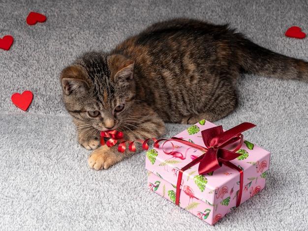 O gatinho cinza está deitado e brincando com uma fita vermelha de um presente rosa que está próximo