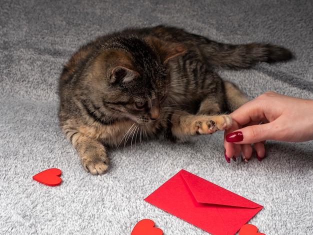 O gatinho cinzento deita-se e brinca com uma mão feminina e, na frente dela, um envelope vermelho