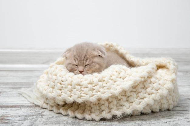 O gatinho dorme em uma bela manta de malha.