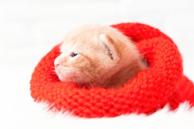 O gatinho ruivo de natal está docemente se aquecendo em um chapéu de papai noel vermelho de malha, macio e aconchegante