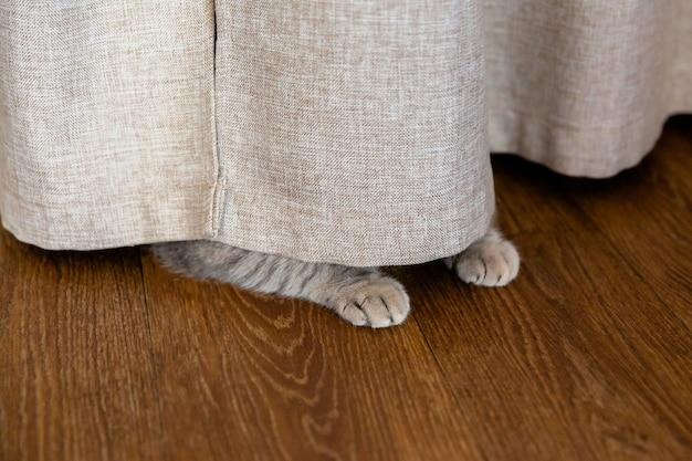 O gatinho se escondeu atrás da cortina. as patas do gato se projetam por baixo da cortina