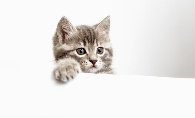 O gatinho surpreendeu o retrato com a pata espreitando por cima da placa branca em branco.