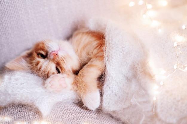 O gatinho vermelho pequeno bonito dorme no cobertor branco da pele