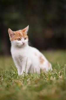O gato adorável aprecia ao ar livre