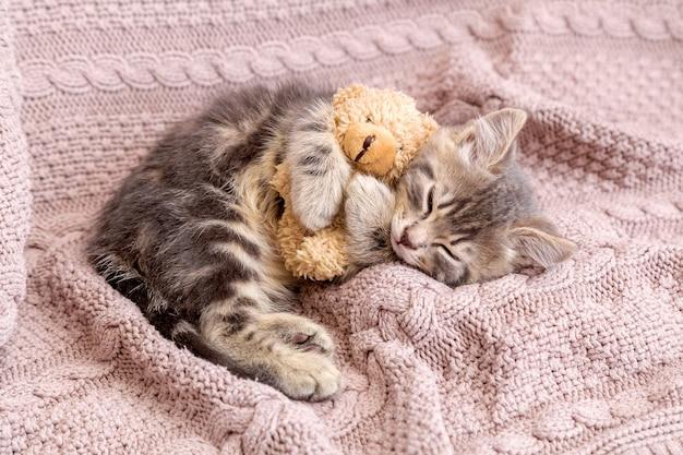 O gato bebê dorme no cobertor aconchegante e abraça um brinquedo. gatinho malhado fofo cochilando confortavelmente com o ursinho de pelúcia na cama de malha rosa. copie o espaço.