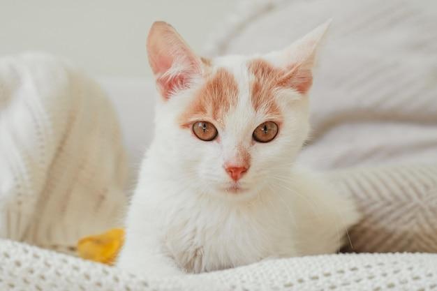 O gato branco e ruivo de 3-4 meses está deitado sobre um cobertor leve. gatinho com pé, enfaixado com bandagem amarela