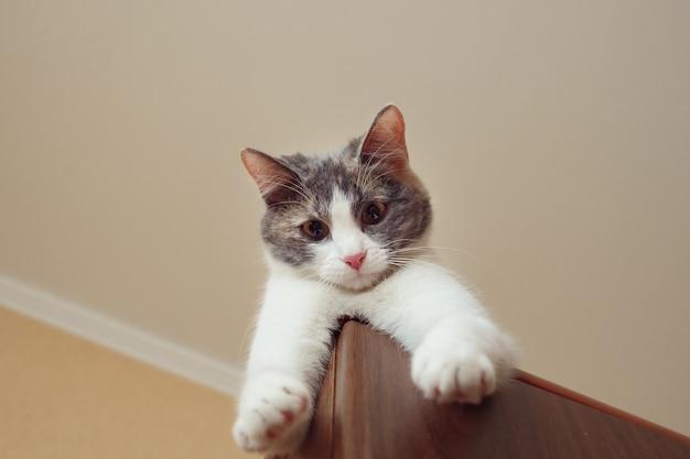O gato brincalhão está deitado no armário e pendura uma pata