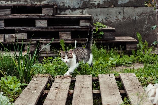 O gato caminha ao longo do caminho no jardim da casa