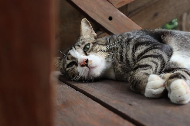 O gato com cabelos grisalhos está deitado em uma cadeira de madeira marrom.
