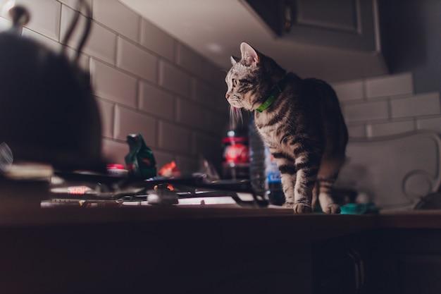 O gato corre pela cozinha à noite e acorda os proprietários com barulho.