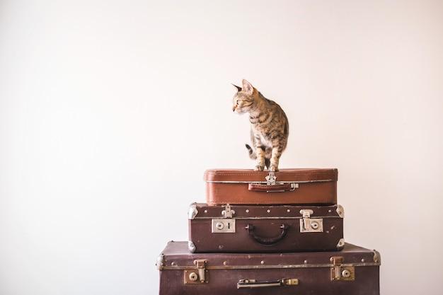 O gato curioso senta-se em malas de viagem do vintage contra o contexto de uma parede leve.