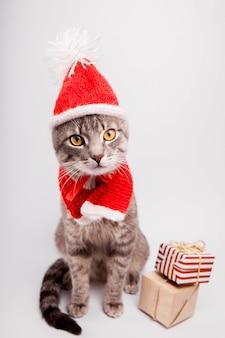 O gato de gato malhado cinzento veste o chapéu de santa e cercado com presentes no fundo branco.