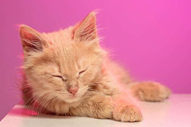 O gato de olhos fechados