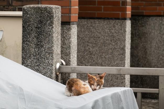 O gato de rua estava doente e babando na rua