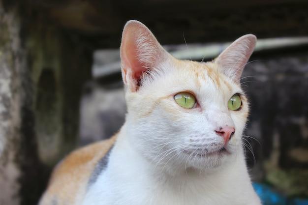 O gato de rua sentou-se agachado e desviou o olhar.