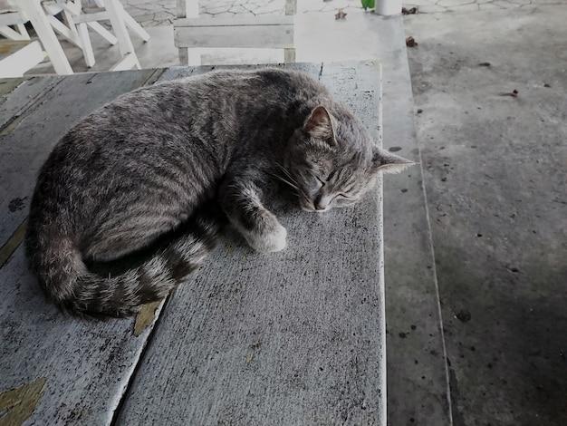 O gato dorme alegremente em cima da mesa.