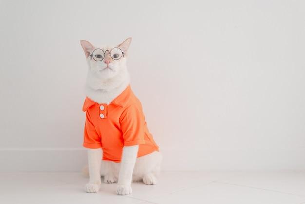 O gato engraçado que vai em férias, veste a camisa da praia e o chapéu no conceito do verão.