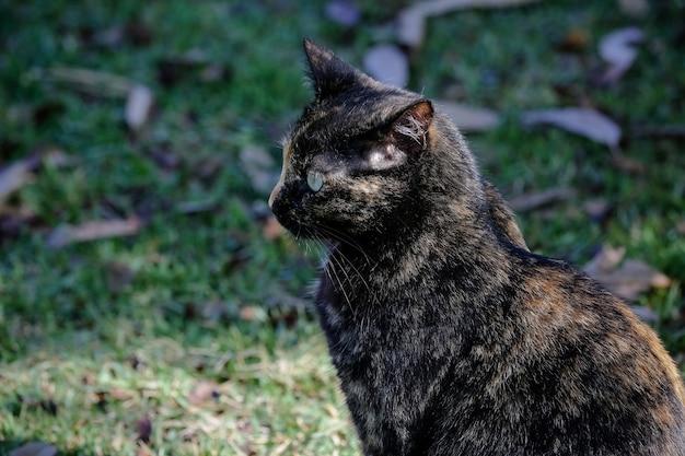 O gato escamoso tem uma pelagem preta e laranja, então também pode ser conhecido como o gato tartaruga