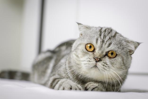O gato está agachado na cama branca no quarto.
