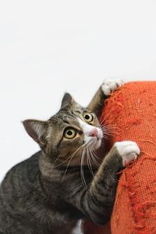 O gato está arranhando o sofá da casa.