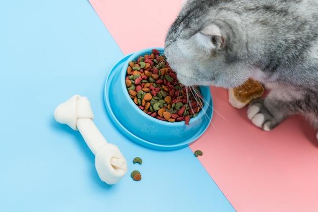 O gato está comendo comida seca e lanche