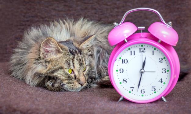 O gato está deitado no sofá e olha para o relógio. é hora de levantar, acordar