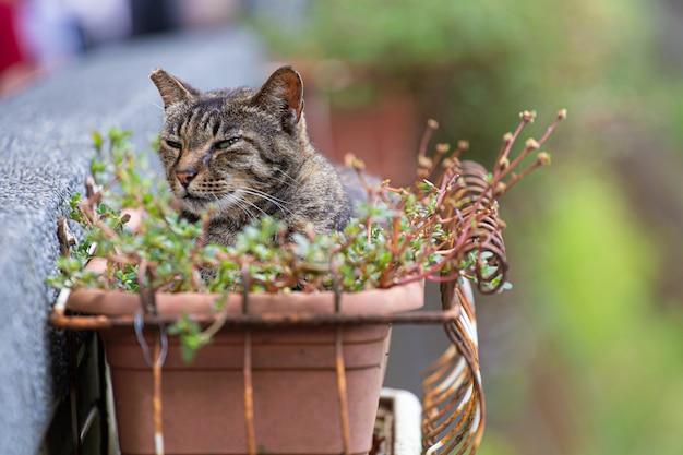 O gato está em um vaso de flores para se refrescar.